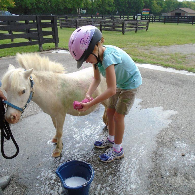 horse-bath